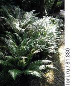 Купить «Папоротник», эксклюзивное фото № 81880, снято 29 июля 2007 г. (c) Михаил Карташов / Фотобанк Лори