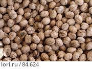 Купить «Россыпь грецких орехов», фото № 84624, снято 16 сентября 2007 г. (c) Мирсалихов Баходир / Фотобанк Лори