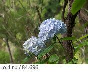 Купить «Голубые цветы», эксклюзивное фото № 84696, снято 2 августа 2007 г. (c) Михаил Карташов / Фотобанк Лори