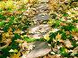 Листья на траве, фото № 84716, снято 20 сентября 2017 г. (c) only / Фотобанк Лори