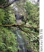 Купить «Ветка над пропастью», эксклюзивное фото № 85116, снято 2 августа 2007 г. (c) Михаил Карташов / Фотобанк Лори