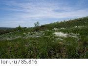 Купить «Ковыль на склоне», фото № 85816, снято 18 мая 2006 г. (c) Борис Панасюк / Фотобанк Лори