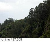 Купить «Лесистый склон горы», эксклюзивное фото № 87308, снято 5 августа 2007 г. (c) Михаил Карташов / Фотобанк Лори