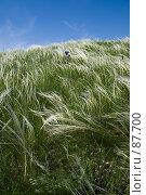 Купить «Ковыль и небо», фото № 87700, снято 18 мая 2006 г. (c) Борис Панасюк / Фотобанк Лори