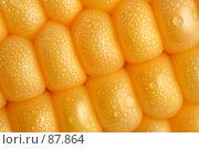 Купить «Свежая кукуруза (зерна) с капельками росы (воды)», фото № 87864, снято 18 сентября 2007 г. (c) Александр Паррус / Фотобанк Лори