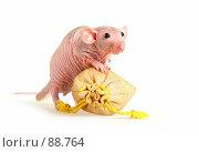 Купить «Лысая крыса с подарочным мешком», фото № 88764, снято 23 сентября 2007 г. (c) Сергей Лаврентьев / Фотобанк Лори