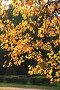 Осень, фото № 90112, снято 29 сентября 2007 г. (c) Alla Andersen / Фотобанк Лори