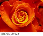 Купить «Роза после дождя», фото № 90972, снято 30 июля 2007 г. (c) Елена Бринюк / Фотобанк Лори