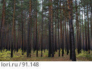 Купить «Лес», фото № 91148, снято 28 сентября 2007 г. (c) Александр Урбеев / Фотобанк Лори
