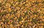 Листва  Leaves, фото № 92068, снято 25 сентября 2007 г. (c) Argument / Фотобанк Лори