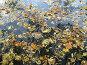 Осень в пруду, эксклюзивное фото № 92184, снято 3 октября 2007 г. (c) Наталья Волкова / Фотобанк Лори