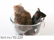 Купить «Мыши», фото № 92220, снято 23 сентября 2007 г. (c) Сергей Лаврентьев / Фотобанк Лори