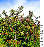 Купить «В саду», фото № 92448, снято 23 сентября 2007 г. (c) Анатолий Теребенин / Фотобанк Лори