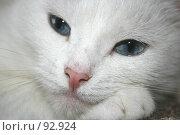 Купить «Ангорская кошка», фото № 92924, снято 29 сентября 2007 г. (c) Юлия Смольская / Фотобанк Лори