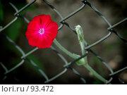 Про Свободу. Стоковое фото, фотограф Борис Никитин / Фотобанк Лори