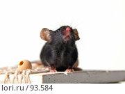Купить «Мышь», фото № 93584, снято 23 сентября 2007 г. (c) Сергей Лаврентьев / Фотобанк Лори