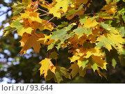 Купить «Начало осени. Желтые листья клена.», фото № 93644, снято 23 сентября 2007 г. (c) Елена Мельникова / Фотобанк Лори
