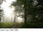 Лес. Стоковое фото, фотограф Герман Филатов / Фотобанк Лори