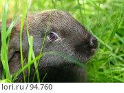 Купить «Кролик», фото № 94760, снято 3 июня 2007 г. (c) Герман Молодцов / Фотобанк Лори
