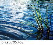 На реке. Стоковое фото, фотограф Абарникова Ирина / Фотобанк Лори