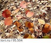 Купить «Веточка осины», фото № 95504, снято 24 сентября 2005 г. (c) Стекляренко Марина / Фотобанк Лори