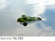 Купить «Лягушонок», фото № 96580, снято 16 августа 2007 г. (c) Герман Молодцов / Фотобанк Лори