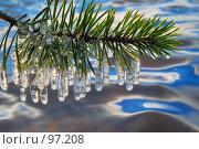 Купить «Сосульки на ветке сосны», фото № 97208, снято 10 октября 2007 г. (c) Валерий Александрович / Фотобанк Лори