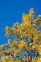 Осенние цвета, фото № 97228, снято 20 сентября 2007 г. (c) Argument / Фотобанк Лори