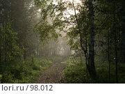 После дождя. Стоковое фото, фотограф Герман Филатов / Фотобанк Лори