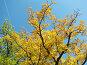 Вершина  дуба, освещенная осенним солнцем, фото № 98536, снято 18 августа 2017 г. (c) Людмила Жмурина / Фотобанк Лори