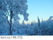 Купить «Зимний пейзаж с глубокими синими тенями на закате», фото № 99172, снято 5 ноября 2006 г. (c) Ольга Красавина / Фотобанк Лори