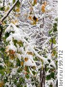 Купить «Лесная сказка», фото № 99712, снято 16 октября 2007 г. (c) Alla Andersen / Фотобанк Лори