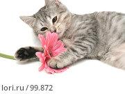 Купить «Серая кошка играет с  розовым цветком», фото № 99872, снято 16 октября 2007 г. (c) Останина Екатерина / Фотобанк Лори
