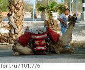 Купить «Давай поговорим дружище...», фото № 101776, снято 18 октября 2007 г. (c) Борис Ганцелевич / Фотобанк Лори