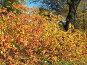Освещенное солнцем разноцветье осеннего куста в  парке, фото № 102056, снято 24 октября 2016 г. (c) Людмила Жмурина / Фотобанк Лори