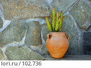 Купить «Горшок с кактусом на фоне каменной стены», эксклюзивное фото № 102736, снято 23 мая 2018 г. (c) Знаменский Олег / Фотобанк Лори