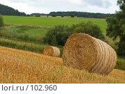 Купить «Солома в поле после сбора урожая», фото № 102960, снято 14 декабря 2019 г. (c) Александр Телеснюк / Фотобанк Лори