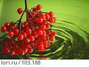 Купить «Кисть калины», фото № 103188, снято 14 ноября 2018 г. (c) Иван Сазыкин / Фотобанк Лори