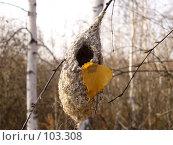 Купить «Опустевшее гнездо», фото № 103308, снято 23 мая 2018 г. (c) Шаврин Виктор Михайлович / Фотобанк Лори