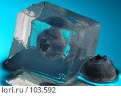 Купить «Черника и лед», фото № 103592, снято 14 ноября 2018 г. (c) Иван Сазыкин / Фотобанк Лори