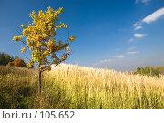 Одинокий дуб в поле на фоне синего неба и белых облаков. Стоковое фото, фотограф Влада Посадская / Фотобанк Лори