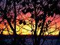 Поздняя осень: последние листья на закате, фото № 105756, снято 19 января 2017 г. (c) Светлана Кучинская / Фотобанк Лори