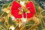 Новогодний натюрморт - Christmas tree ornaments, фото № 105764, снято 27 октября 2007 г. (c) Алексей Судариков / Фотобанк Лори