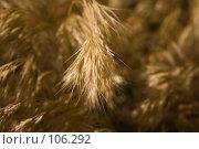 Купить «Засуха», фото № 106292, снято 6 июня 2007 г. (c) Coler / Фотобанк Лори