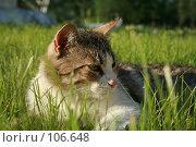 Кот в траве. Стоковое фото, фотограф Чумилин Леонид Александрович / Фотобанк Лори