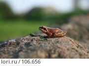 Царевна-лягушонок. Стоковое фото, фотограф Чумилин Леонид Александрович / Фотобанк Лори