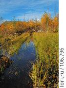 Купить «Заболоченная дорога», фото № 106796, снято 20 сентября 2007 г. (c) Валерий Александрович / Фотобанк Лори