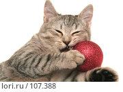 Купить «Серая кошка играет с красной новогодней игрушкой», фото № 107388, снято 19 октября 2007 г. (c) Останина Екатерина / Фотобанк Лори