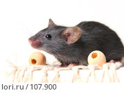 Купить «Мышь», фото № 107900, снято 23 сентября 2007 г. (c) Сергей Лаврентьев / Фотобанк Лори