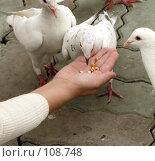 Купить «Покормите птиц!», фото № 108748, снято 27 апреля 2018 г. (c) Вера Тропынина / Фотобанк Лори